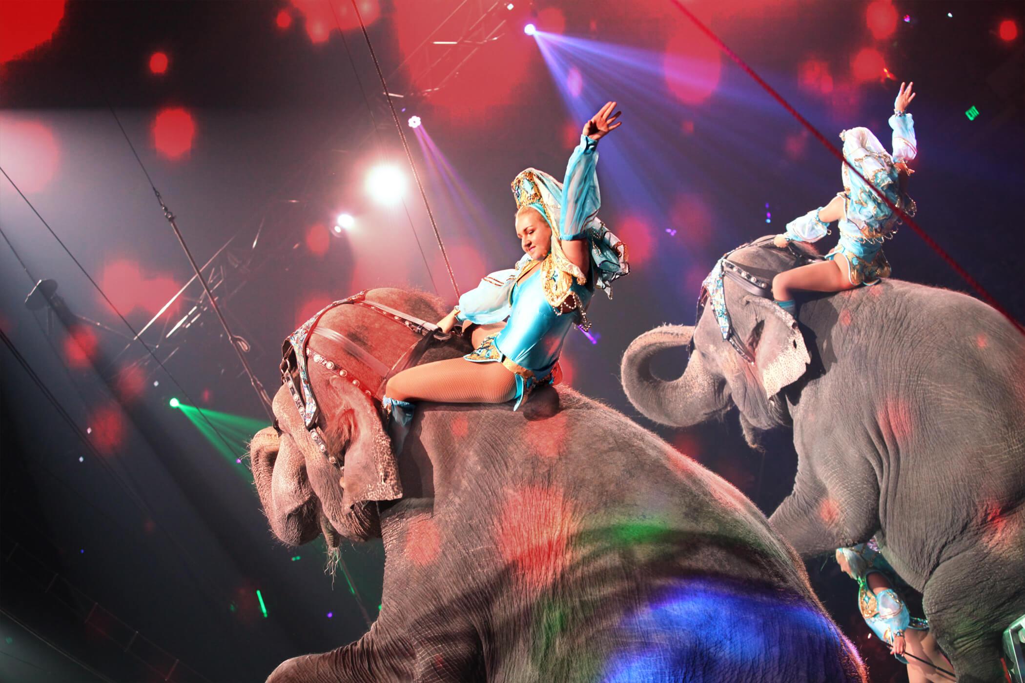 ZERBINI ELEPHANTS img