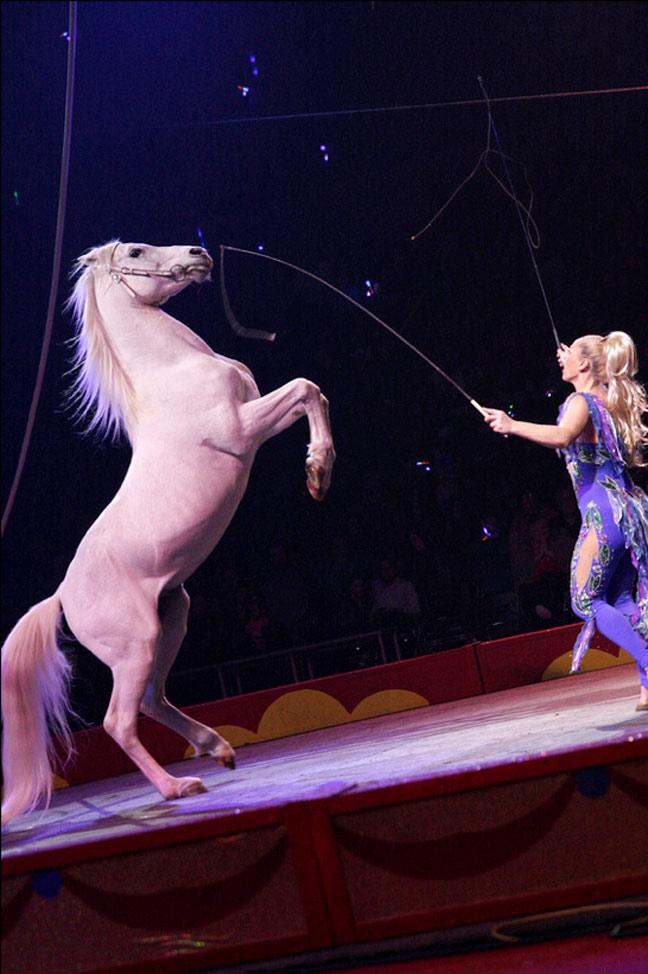Royal Canadian Circus via Royal Canadian Circus